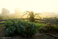 Der Bauerngarten