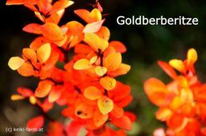 goldbereritze-x